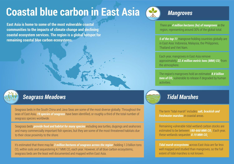 Let's talk about blue carbon solutions